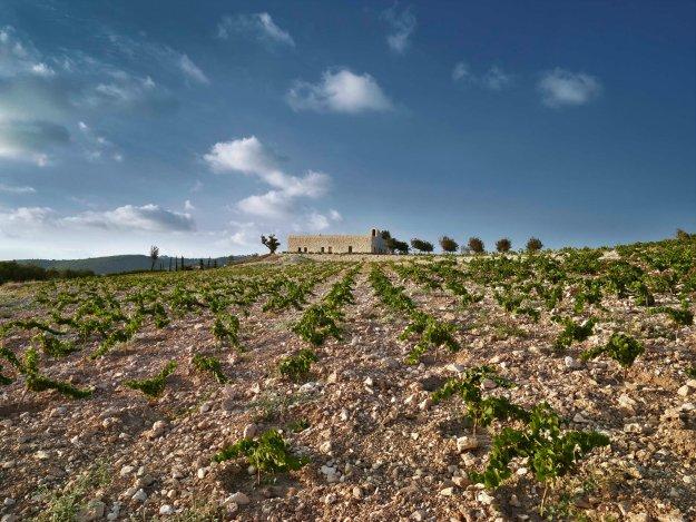 IXSIR Winery_12