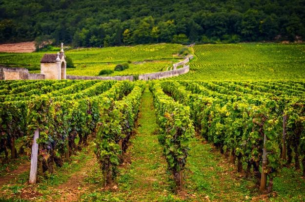 borgonha-vinho-tinto-franca