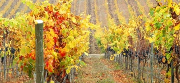 Conheça a Matetic, a premiada vinícola biodinâmica chilena