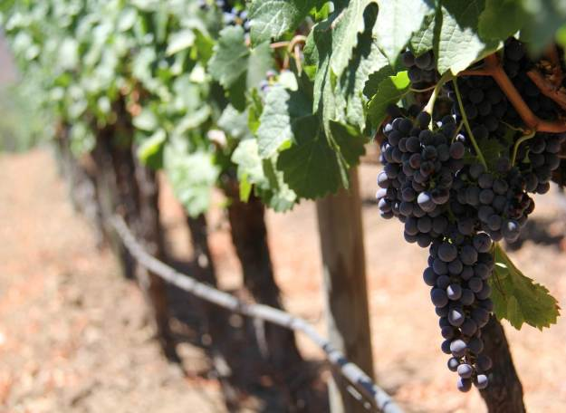 altair-san-pedro-vinhos-sideral-chile