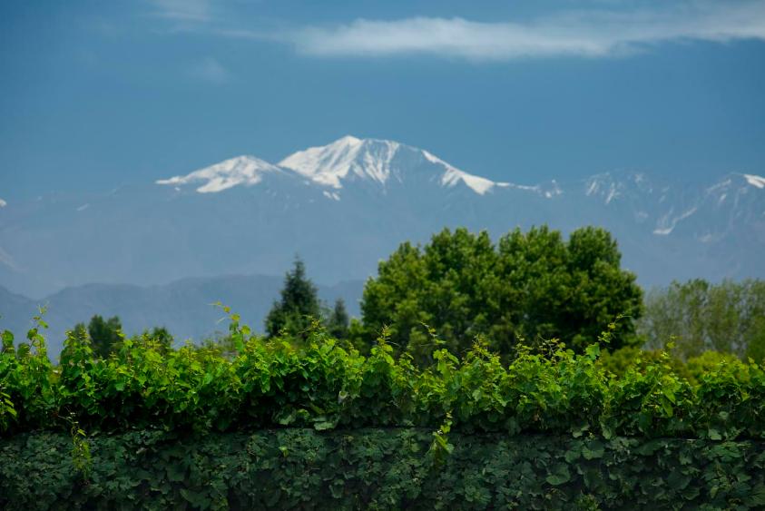 dante-robino-vinicola-andes