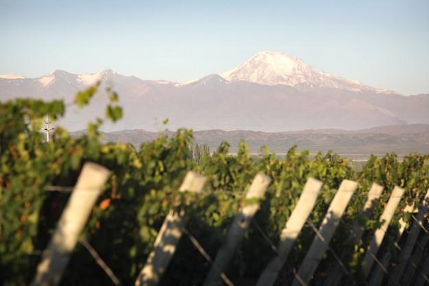 Vista dos Andes da vinícola Zorzal