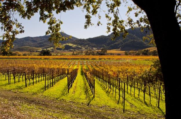 Napa Valley, na Califórnia.