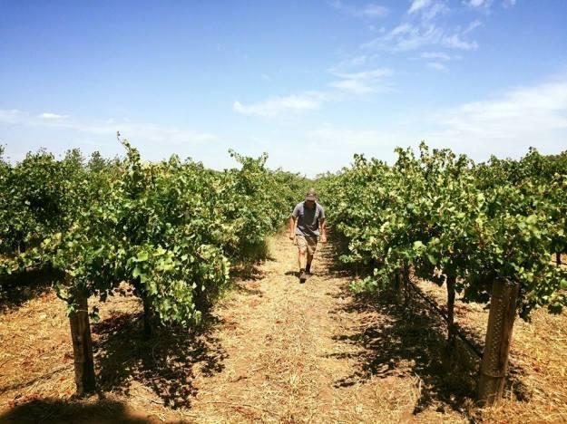 Vinhedos da vinícola Heartland Wines
