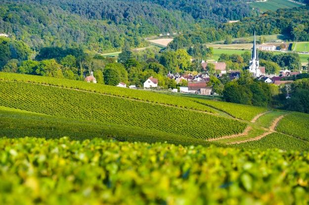 Vinhedos na região de Champagne, no noroeste da França.